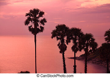 beautiful purple sunset with palm trees silhouette
