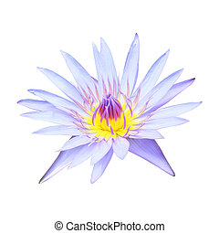 Beautiful purple water lily or lotus flower isolated on white background.