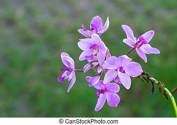 Beautiful purple wild flower in the park outdoors nature background