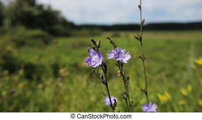 Beautiful purple wildflower - Closeup on beautiful purple...