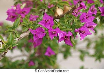 Beautiful purple wlower