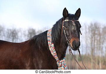Beautiful quarter horse in winter