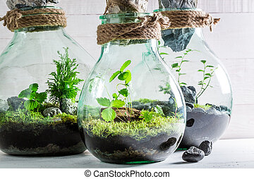 Beautiful rain forest in a jar as new life concept