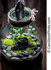 Beautiful rain forest in a jar with self ecosystem