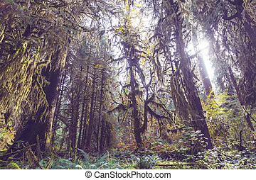Olympic - Beautiful rain forest in Olympic National Park, ...