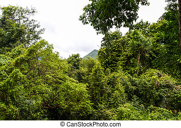 Beautiful rain forest