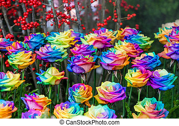 beautiful rainbow roses flowers