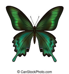Beautiful realistic green butterfly isolated on white background