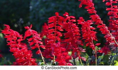 beautiful red autumn flowers