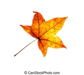 Beautiful red autumn leaf on the white background