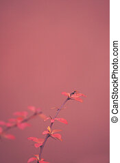 red barberry illuminated by January light on a smooth background