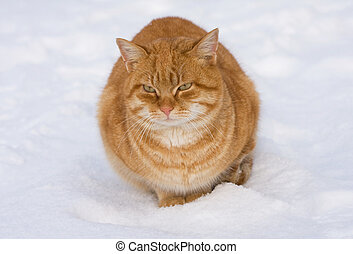 red cat - beautiful  red cat sits on to snow in winter