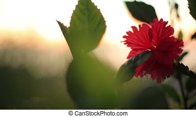 Beautiful red flower in the grass close up