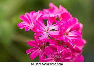 beautiful red flower. Macro