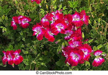 Beautiful red flowers.