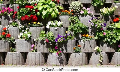 Beautiful red flowers . Flowers in decorative flower beds.