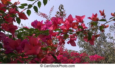 beautiful red flowers on bush