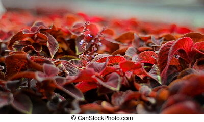 beautiful red foliage in front of the camera