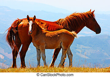 Beautiful red horses