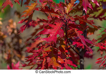 Beautiful red leaves in autumn background