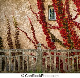 Beautiful red leaves on house wall