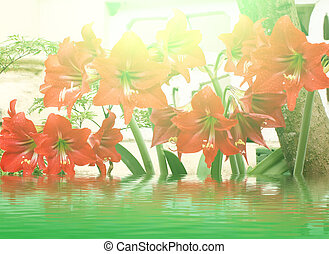 beautiful red lily
