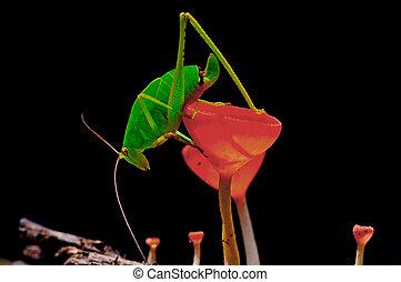 locust - Beautiful red mushroom with a locust