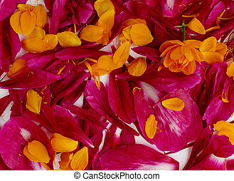 Beautiful red peony petals background or texture top view