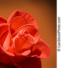 Beautiful red rose macro on brown background