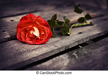 Beautiful red rose on wooden rustic background. Summer...