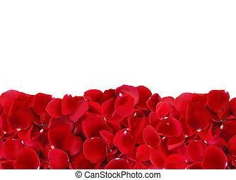beautiful red rose petals isolated on white background