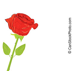 Beautiful red rose, vector illustration