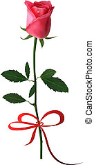 Beautiful red rose with a bow