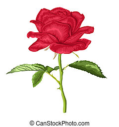 beautiful red rose with long stem and leaves with the effect...