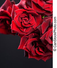 Beautiful Red Roses Bouquet over black