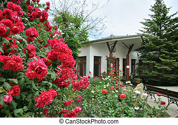 Beautiful red roses in front of the house - Landscape Design