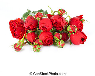beautiful red roses on a white background with space for text