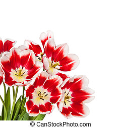 Beautiful red tulips flowers bouquet