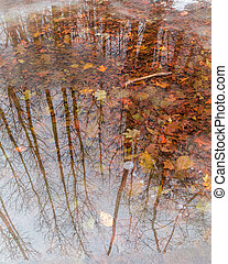 beautiful reflection of falls tree
