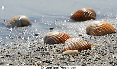 Beautiful relief seashells that wash a wave - Beautiful...