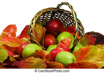 beautiful ripe apples in the bright