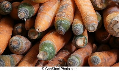 Beautiful ripe carrots at market stall - Beautiful ripe...