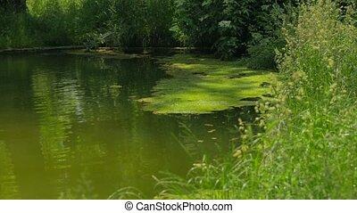 Beautiful River Flowing In Greenery - DOLLY SHOT. Beautiful...