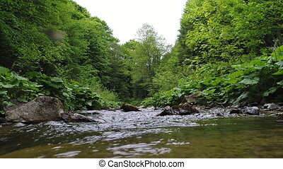 Beautiful river in Carpathian mountains