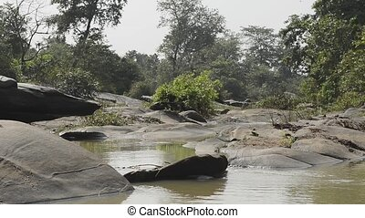 beautiful river National Park, India - forest landscape with...