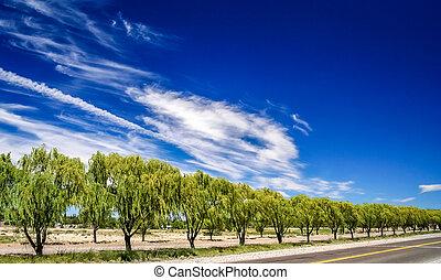 Beautiful road along the Rio Negro river Argentina
