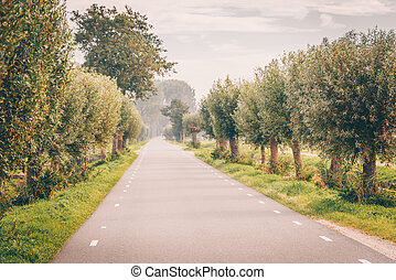 Beautiful road surrounded by green trees