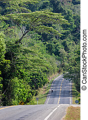 road with tamarind trees