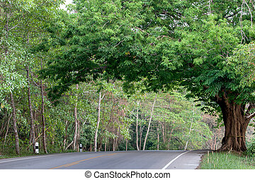 Beautiful road with tamarind trees