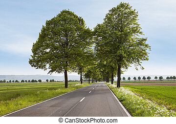 Beautiful road with trees